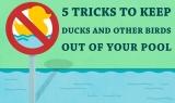 Comment éviter que les canards n'entrent dans votre piscine