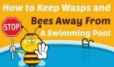 Comment éloigner les abeilles et les guêpes d'une piscine
